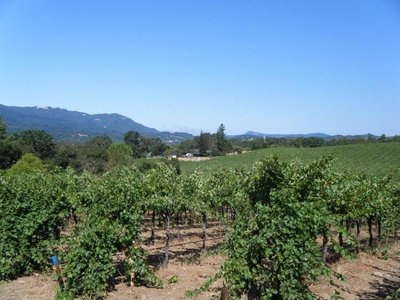 vineyard_north_1.jpg